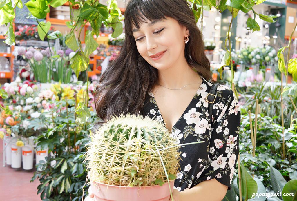 buyuk-kaktus