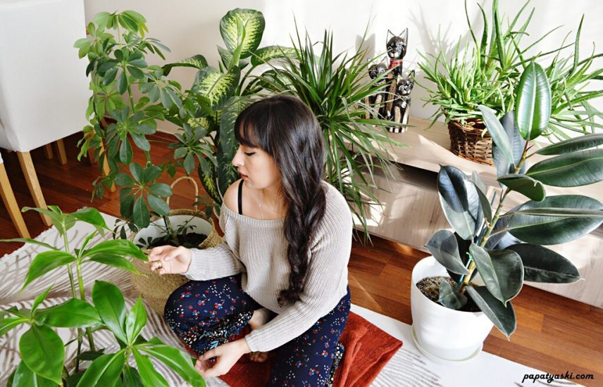 bitki-bakimi-nasil-olmalidir-blog