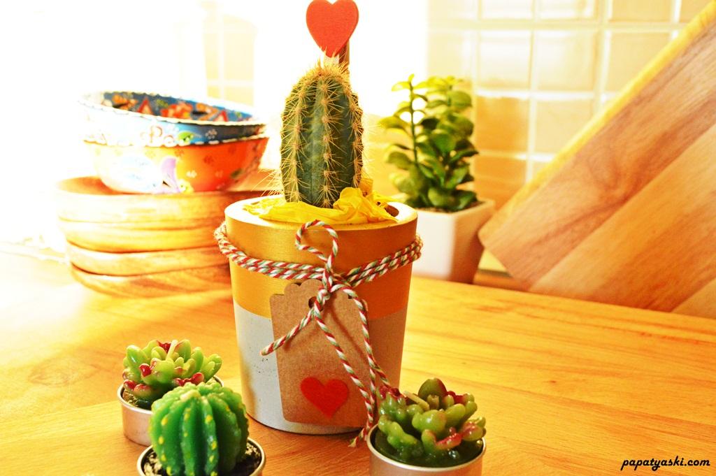 tasarim-beton-saksi-kaktus