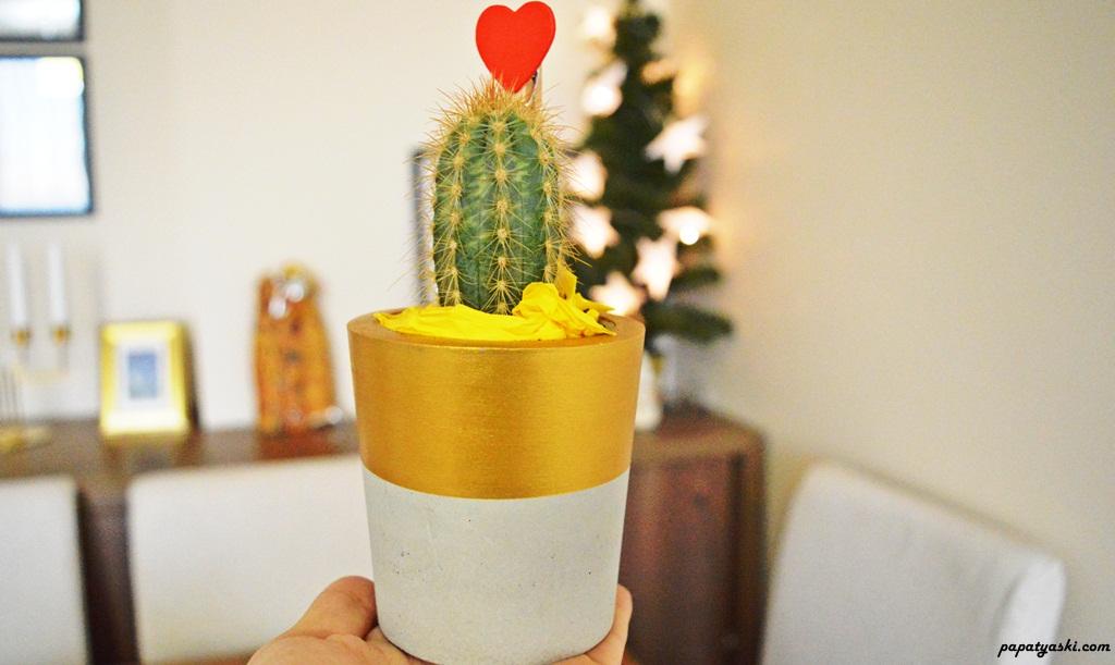 tasarim-saksi-kaktus